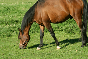 Vaccinating your horse for eastern equine encephalitis