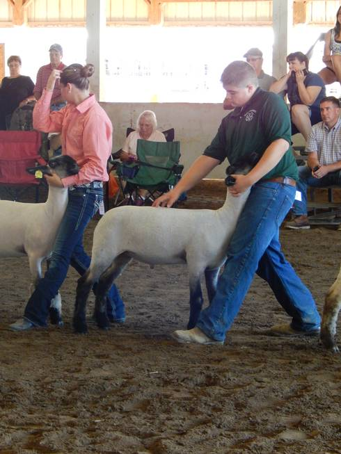 Nate Scovill at a lamb show.