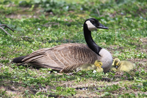 Explore the beauty of nature on Mother's Day at the Bird Sanctuary