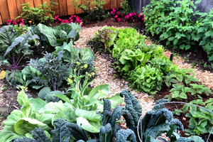 Garden Extravaganza Conference cultivates smart gardening practices for all