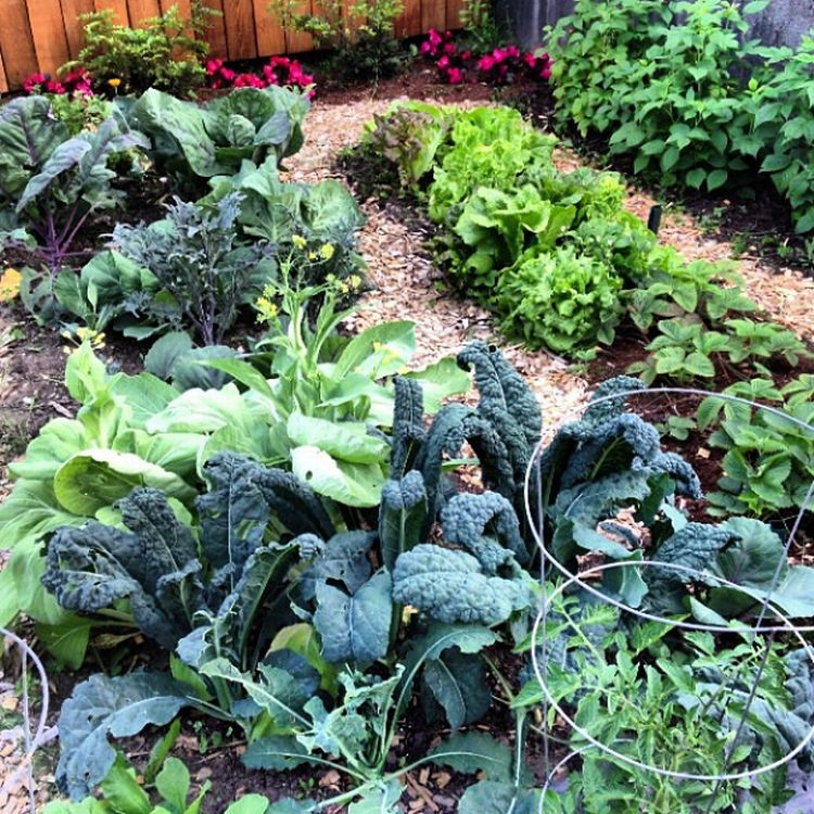 Learn about smart gardening practices and more at the 2015 Garden Extravaganza Conference in Marquette. Photo credit: The_April, Flickr.com