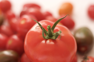 Protect greenhouse tomato transplants from bacterial spot