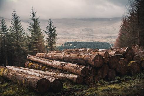 Large logs over looking forest scene.