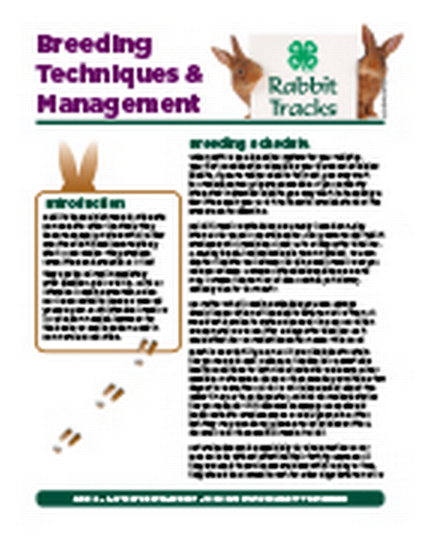 Rabbit Tracks: Breeding Techniques and Management - MSU Extension