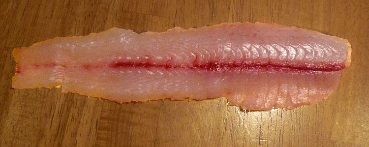 Silver carp filets are bony but have a mild flavor. | Michigan Sea Grant