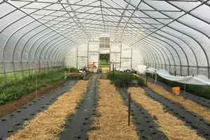 Flint, Michigan, area urban agriculture update — May 18, 2018