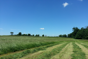 Michigan hay field