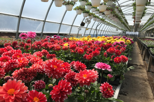 Register now for biological control for summer greenhouse growers online course