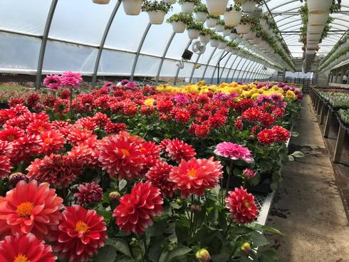 Register Now For Biological Control For Winter Greenhouse Growers