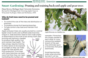 Pruning and training backyard apple and pear trees for smart gardening
