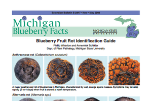 Michigan Blueberry Facts: Fruit Rot Identification Guide (E2847)