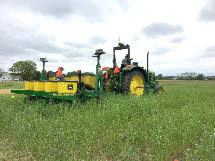 Interseeding soybean into standing cereal rye cover crops.