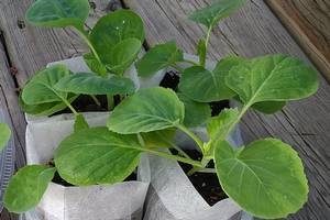 Smart Gardening with Vegetables 101: Late spring tips
