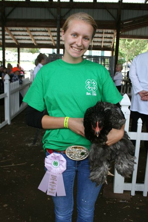 Grace Schmidt participating in the Fowlerville Family Fair in the poultry division.