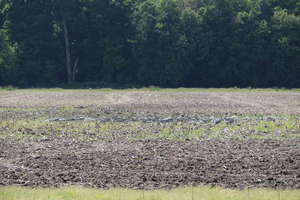West central Michigan field crop update – June 6, 2019