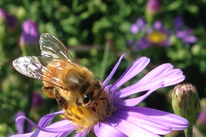 Learn how consumers and ornamental plant growers can protect pollinators at Ag Action Day