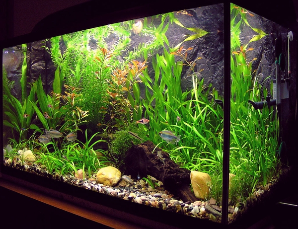Are you gifting an aquarium for the holidays? Make sure to