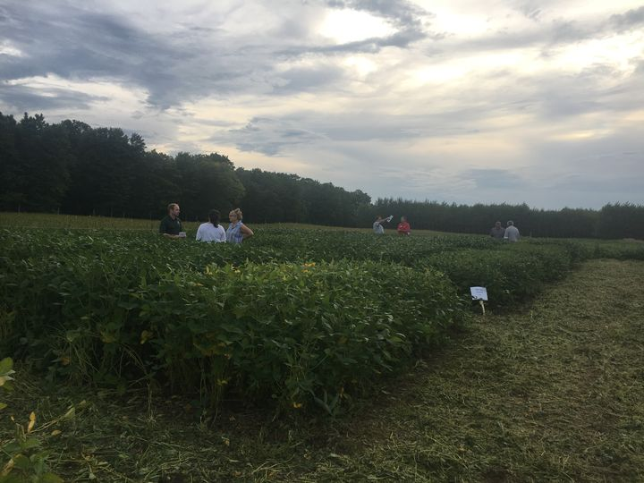 Soybean field day