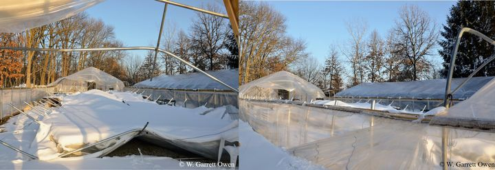 Photo 1. Heavy, wet snow accumulation on the double-poly greenhouse resulted in collapse of the greenhouse structure. All photos by W. Garrett Owen.