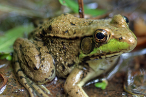 Science ideas for preschoolers: Rock 'n roll frogs