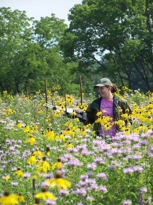 Michigan State University undergraduate research assistant Jacquelyn Albert samples a Michigan field site for pollinators.