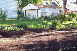 How might Flint's water contamination affect garden soils? Part 1