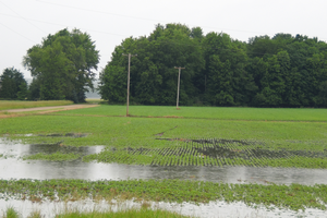 Assessing water damage to emerged soybeans