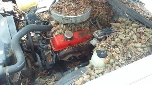 A Car S Engine Compartment Can Seem Like Squirrel Ideal Storage E Photo By Scott
