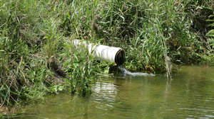 Contributors to increased phosphorus loss in drainage water and possible solutions