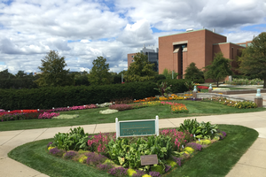 The 2017 MSU Trial Gardens. All photos by Daedre McGrath, MSU.