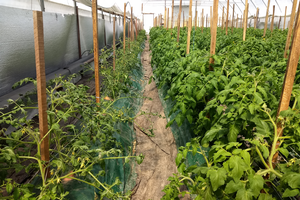 East Michigan vegetable update – April 24, 2019