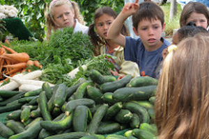 Educational activities at farmers markets for young people