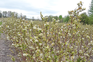 2021 Pre-Bloom Blueberry Webinar