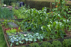 Plan now for crop rotation in your vegetable garden