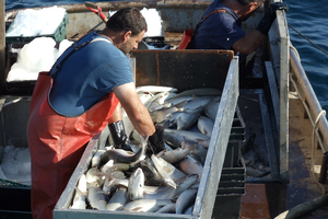 Resources for fisheries and aquaculture industries – Covid-19 response