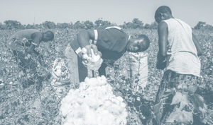 Will the COVID-19 Pandemic Lead to a Cotton Crisis in Mali?
