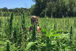 Reintroduction of industrial hemp into US agriculture