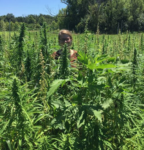 Marguerite Bolt of Purdue University will discuss the reintroduction of industrial hemp into U.S. agriculture at May 15 Breakfast Meeting Series. Photo by Marguerite Bolt, Purdue University.
