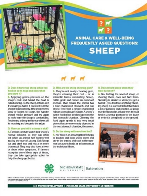 Poster with information on sheep.