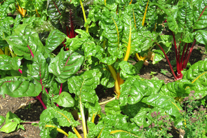 Get calcium and vitamin D by growing and eating vegetables and fruit