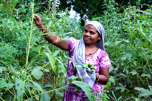MSU organizes virtual discussion on importance of home gardens in developing countries