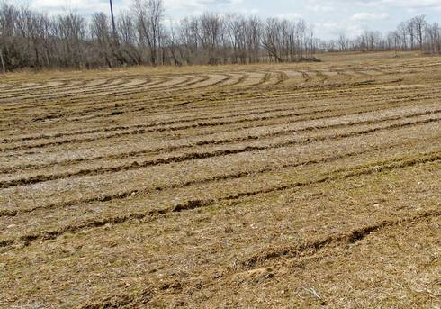 Photo 1. Harvest ruts from 2017. All photos by Mike Staton, MSU Extension.