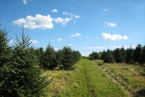 Conifer genetics and tree improvement webinar series