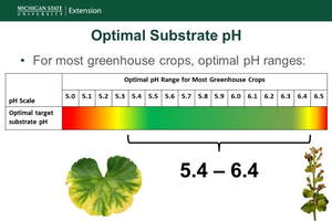 Figure 1. The optimal substrate pH for most greenhouse crops is between 5.4 and 6.4. Figure by Garrett Owen, MSU Extension.