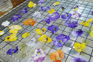 Candying or crystallizing flowers: Add a bit of elegance to your next dessert