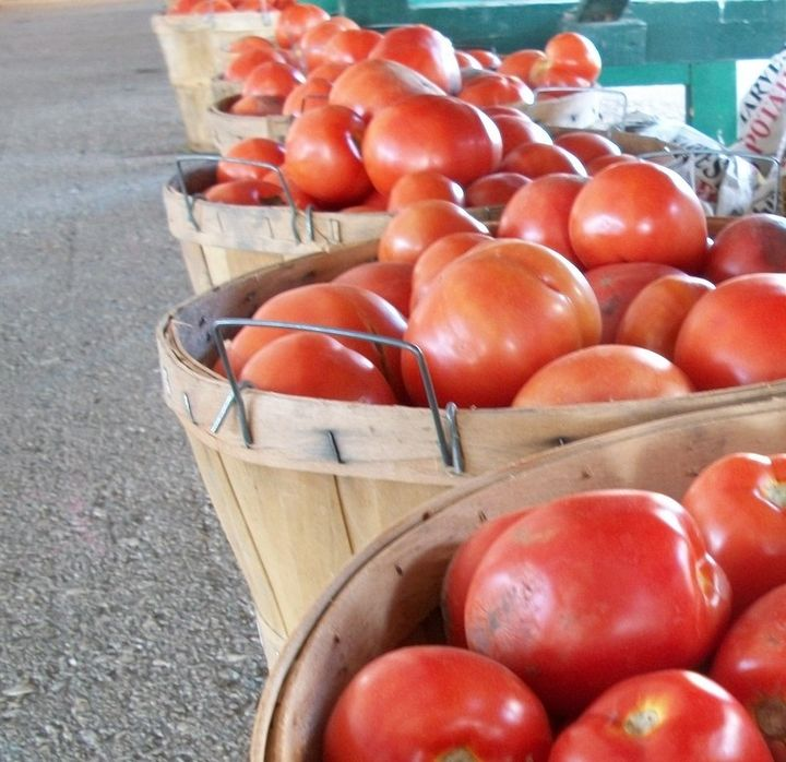 Stock up on tomatoes for freezing or canning in late summer when they are in peak season and priced to move. Photo credit: Julia Darnton, MSU Extension Community Food Systems educator