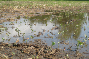 Muddy fields and rush to finish field work may move soybean cyst nematodes
