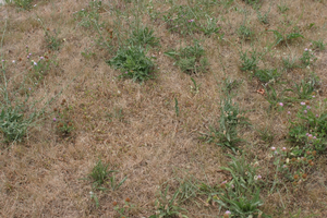 Hot, dry weather impacts fall turfgrass management