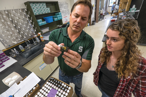 MSU entomologists receive $2.5 million from National Science Foundation to study infectious disease