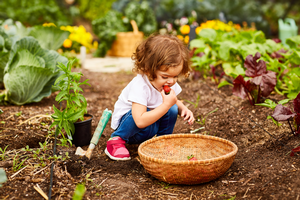 A young girl crouches over a basket in a garden. She bites into a freshly picked strawberry.